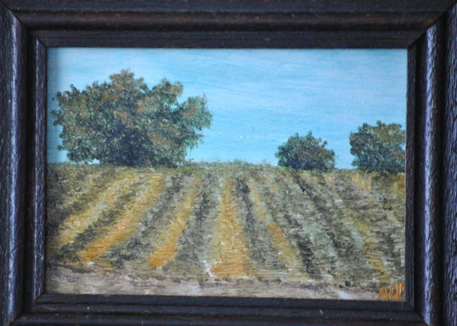 Campo con fieno e querce