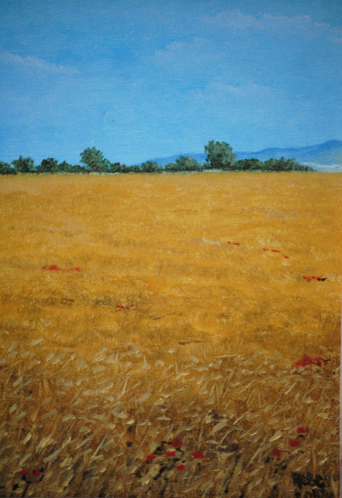 """""""Campo di grano""""- olio su tavola cm 24×30"""