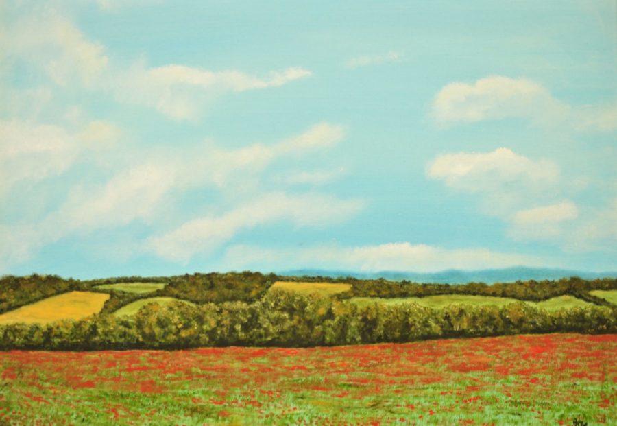"""""""Campo di papaveri"""" olio su tela cm 70×50"""