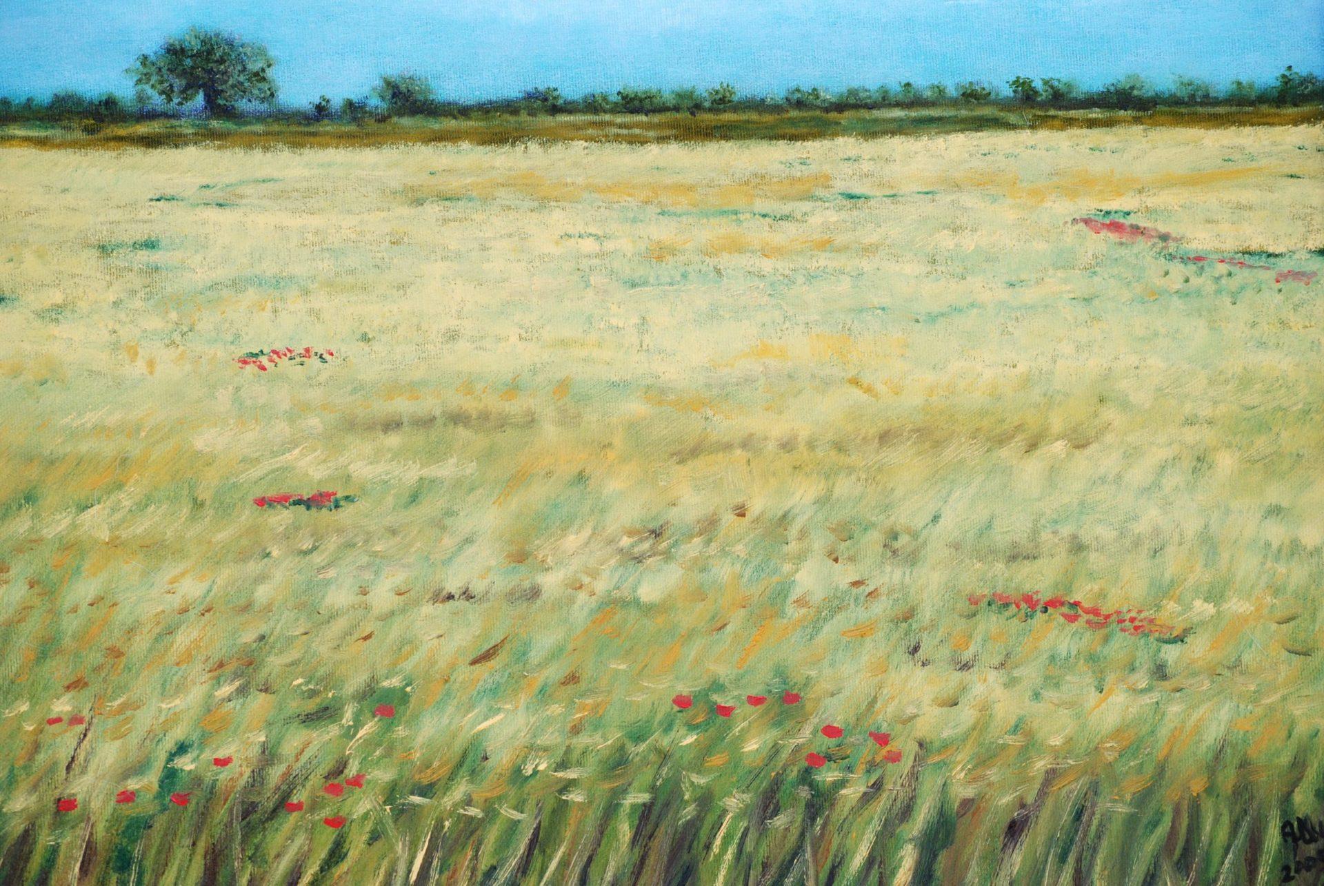 """"""" campo di grano"""" olio su tela cm 50×40"""