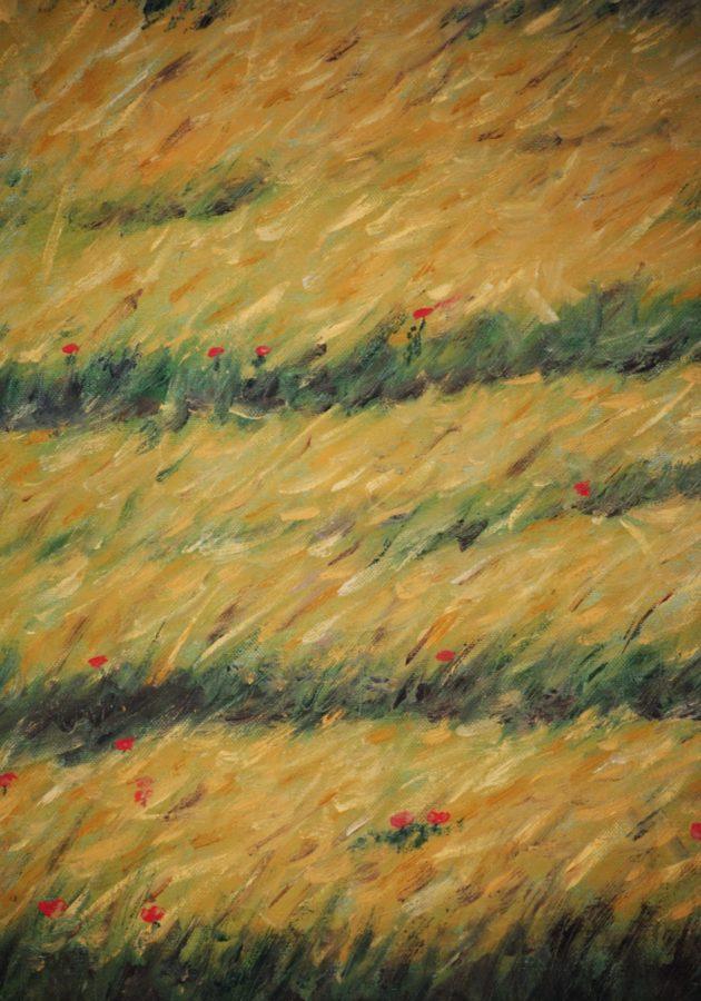 """""""Campo di grano"""" olio su tela cm 40×50"""