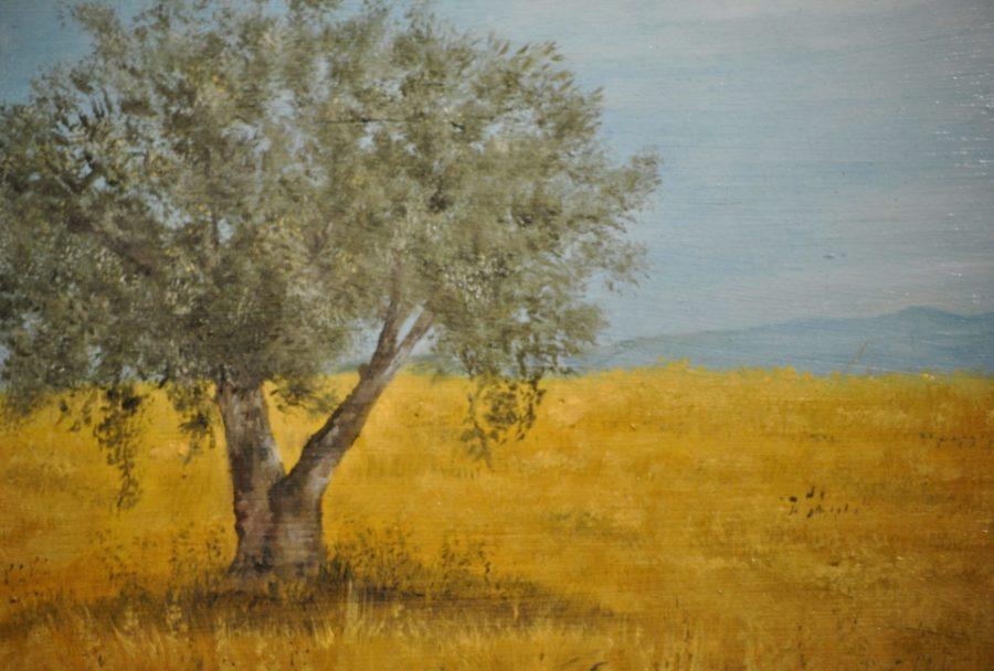 """""""Olivo in campo di grano"""" olio su tavola cm 29×22"""