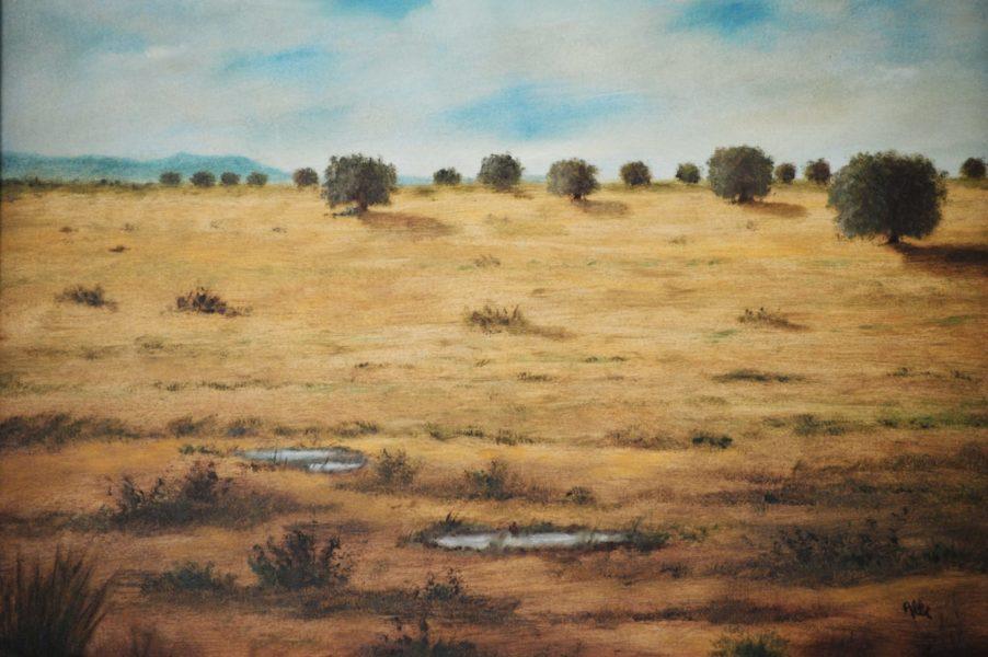 """""""Querce in un campo"""" olio su tela cm 50×40"""