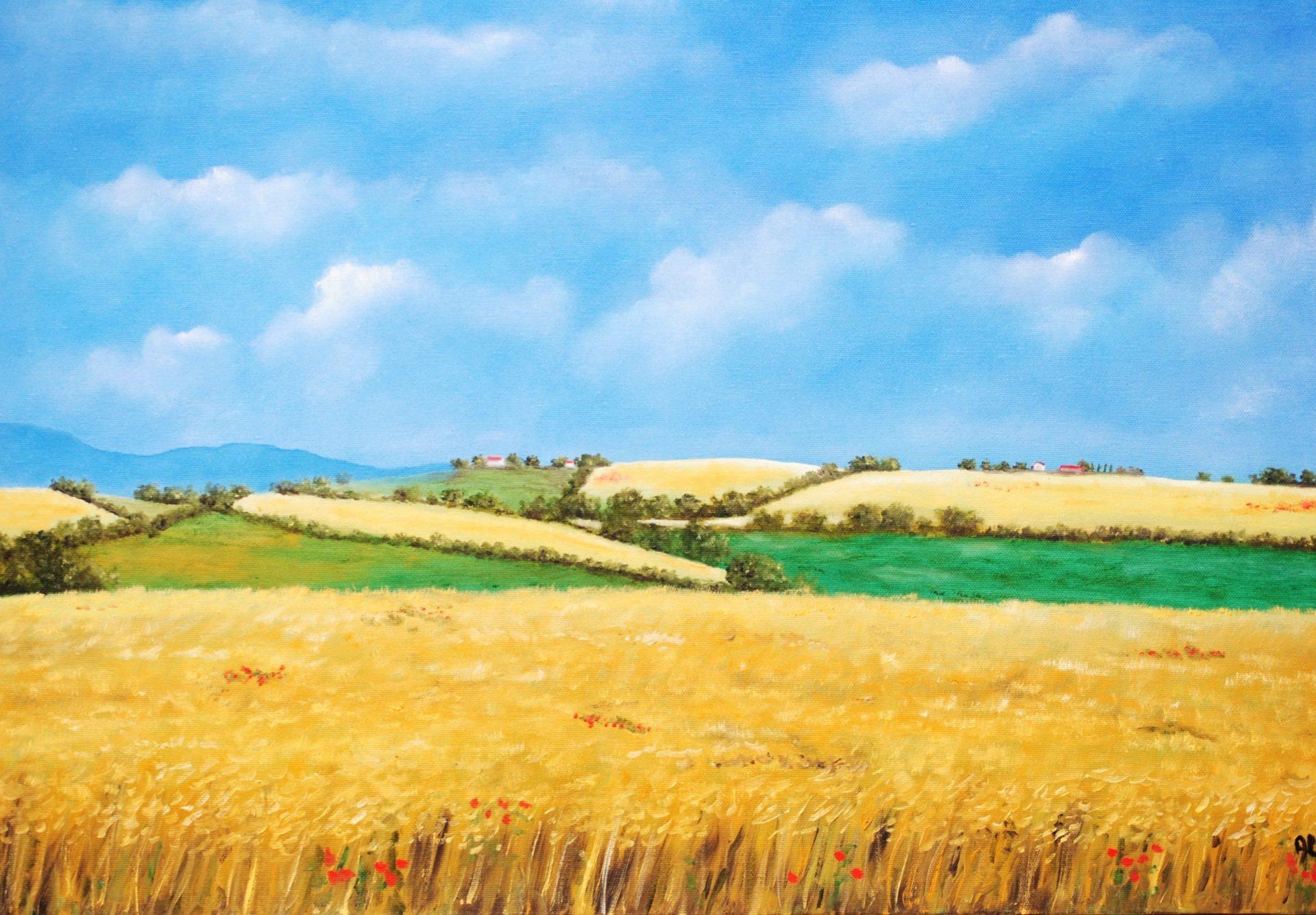 """""""Colline con grano"""" olio su tela cm 70×50"""