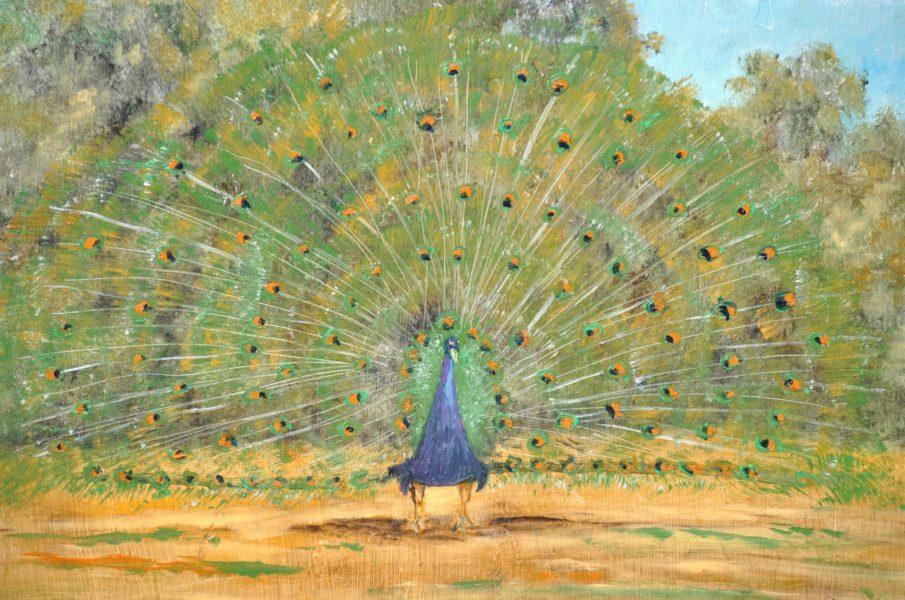 """""""Il pavone"""" olio su tavola cm 43×31"""