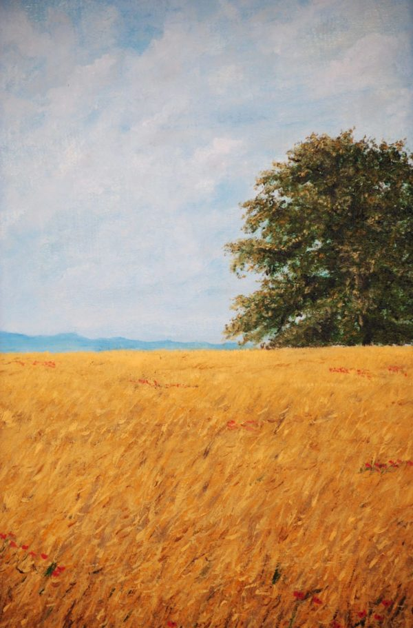 """""""Quercia in campo di grano"""" olio su tela cm 35×45"""