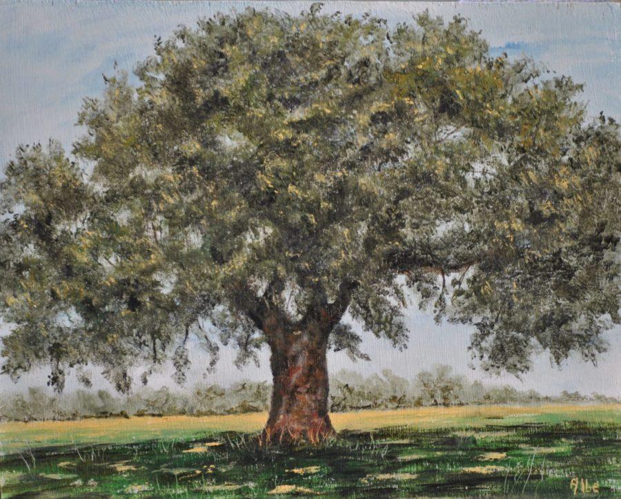 """""""Quercus robur(Farnia) olio su tavola cm 32×26"""