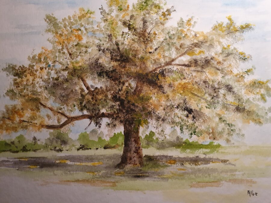 """Quercus"" – acquarello su carta cm 43×34"