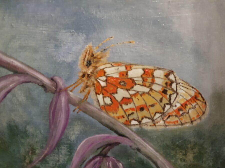 """""""Papillon"""" . olio su tela cm 40×30"""